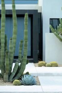 Cactus Landscaping 5
