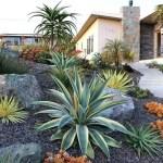Cactus Landscaping 8