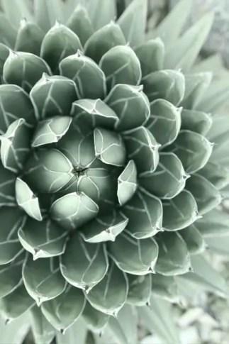 Succulent Design 19