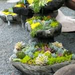 Succulent Design 20
