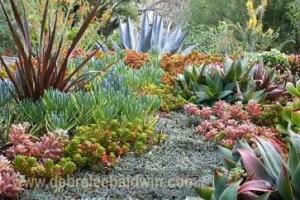 Succulent Design 27