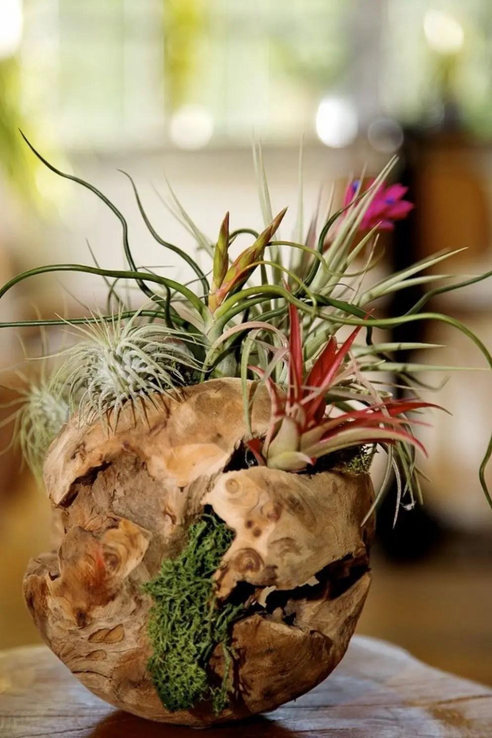 Succulent Design 3