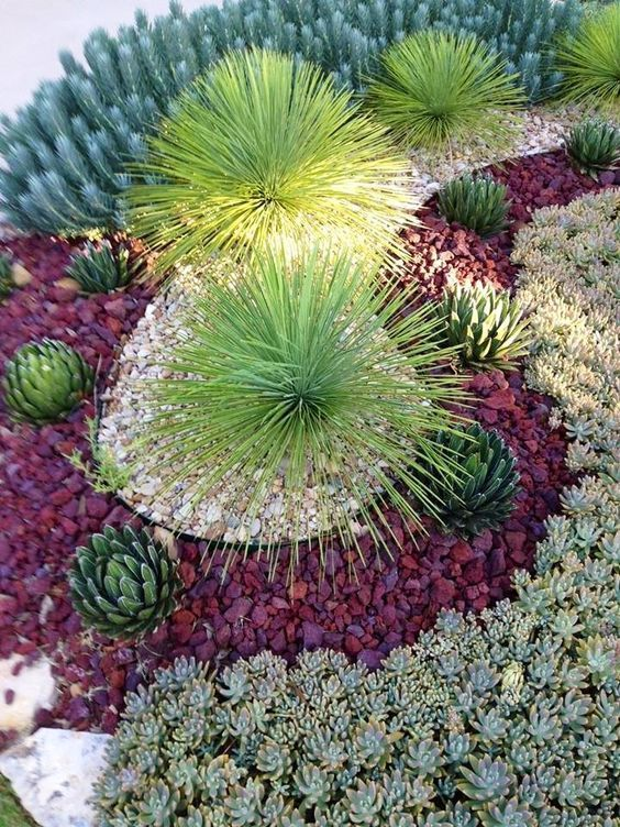 Succulent Design 35