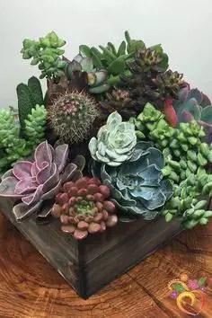 Succulent Design 4