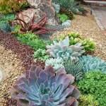 Succulent Design 42