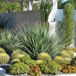 Succulent Design 48