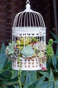 Succulent Design 6