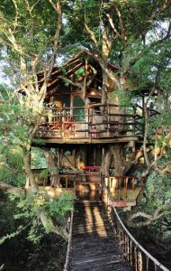 Tree House 7