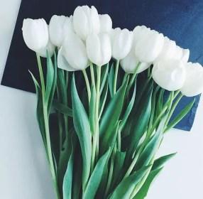 White Tulips 21