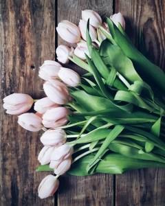White Tulips 35