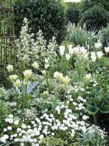 White Tulips 37