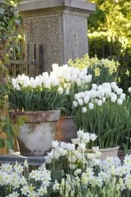 White Tulips 39