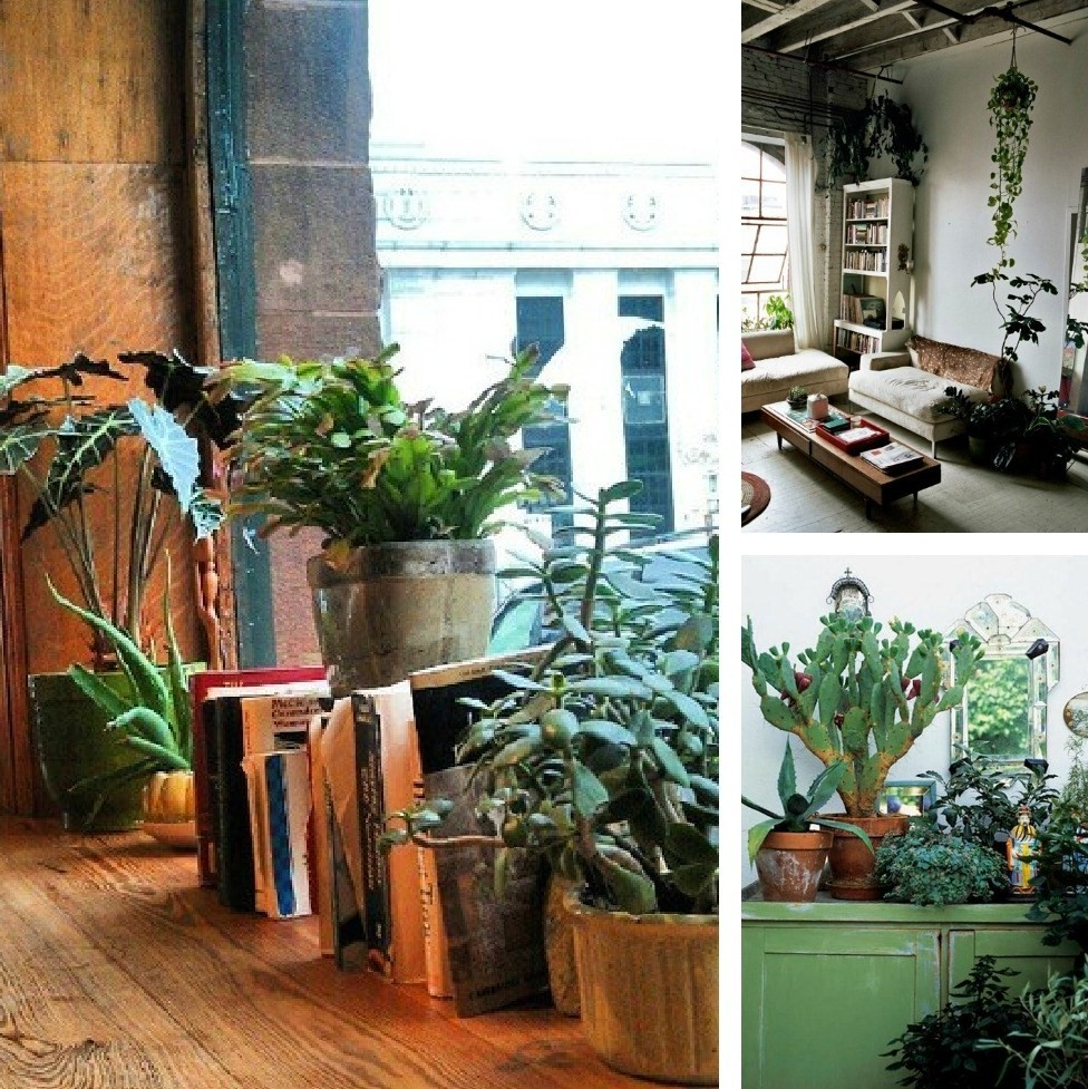 Decorating Dilemma House Plants Decorator's Notebook