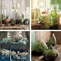 Decorating dilemma: house plants - Decorator's Notebook