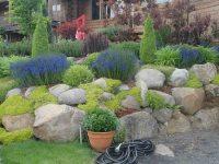 Rock Garden Inspiration Ideas - Decor Around The World