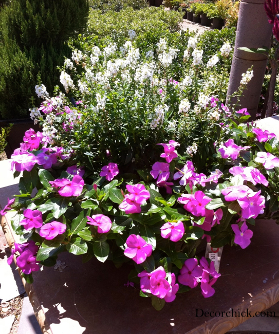 8 Stunning Container Gardening Ideas: Beautiful Container Garden Ideas