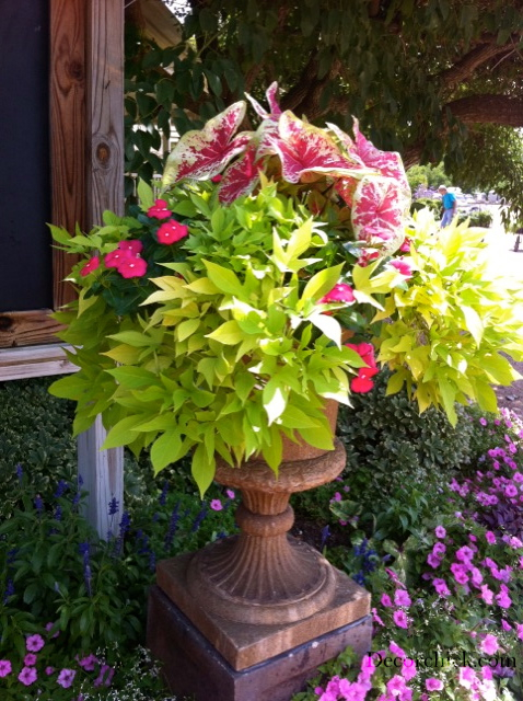 Beautiful Container Garden Ideas Decorchick! ®