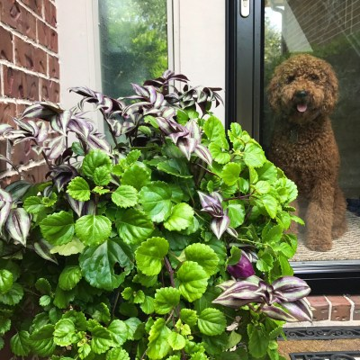 Front Door Planters | Decorchick!®