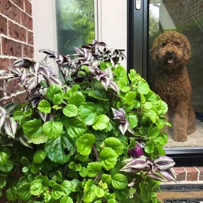 Front Door Planters | Decorchick!®