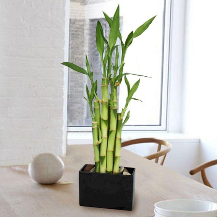 Wonderful DIY Ornamental Plants Design Ideas