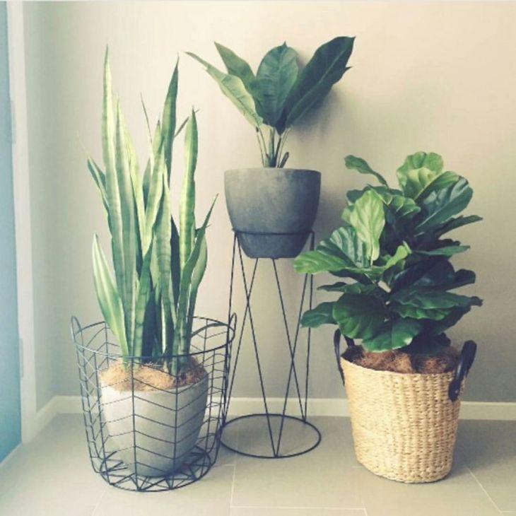 Best Ornamental Plants Design Ideas