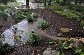 Garden Rain Native