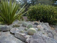 Australia Cactus Gardens