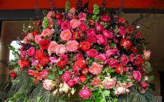 Beautiful Garden Rose Flowers