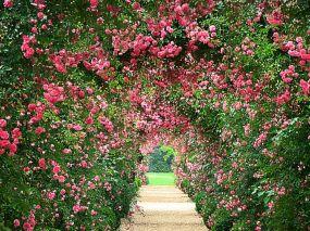 Beautiful Rose Garden Desktop Backgrounds
