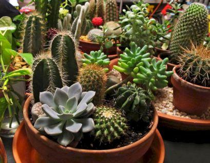 40 Best Cactus to Grow Ideas For Your Garden DECOREDO