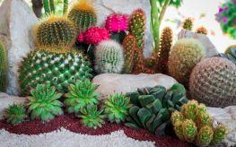 Cactus Garden Idea