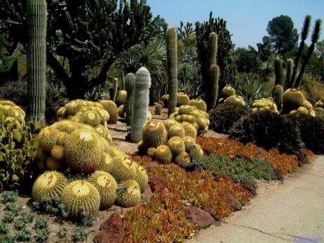 Cactus Garden Landscape Ideas