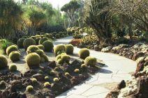 Cactus Garden Landscapings