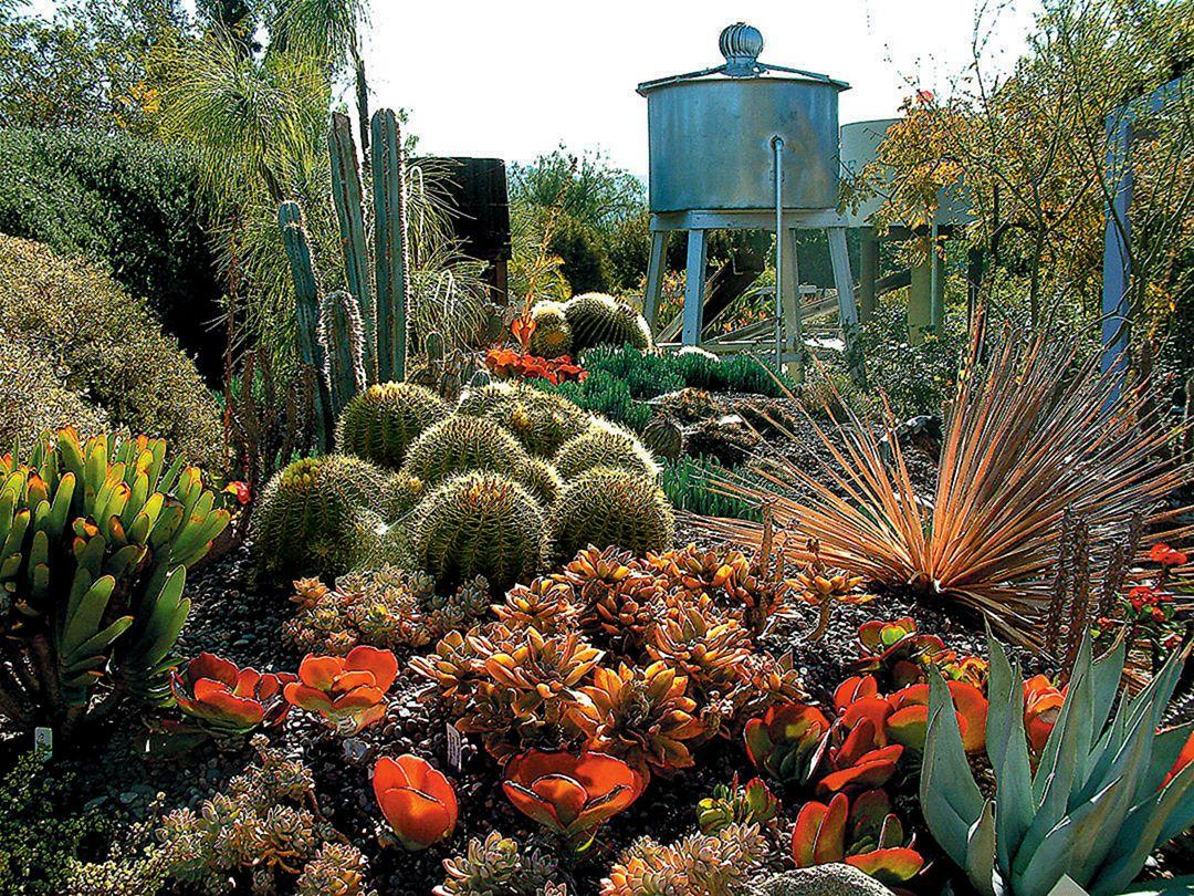 40+ Best Cactus to Grow Ideas For Your Garden – DECOREDO