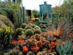 Cactus Succulent Garden Design