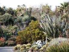 Desert Cactus Garden