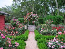 English Cottage Rose Garden