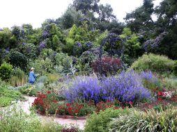 Huntington Library Herb Garden