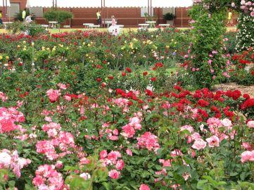 International Rose Garden