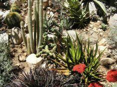 Landscape with Cactus and Succulent Plants