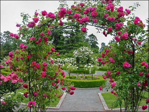 Rose Garden Beautiful