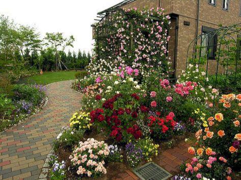 45+ Awesome Garden Rose Flower Ideas For Amazing Garden – DECOREDO