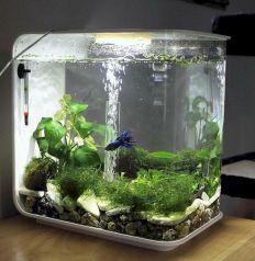 Aquarium Backyard Garden Ideas 1