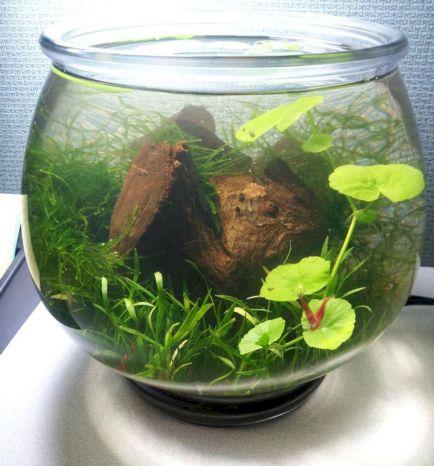 Aquarium Backyard Garden Ideas 10