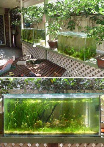 Aquarium Fish Outside Pond 1