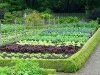 Awesome Vegetable Garden