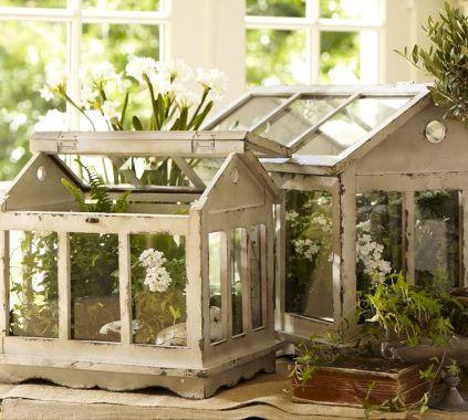 Cold Frame Gardening 3