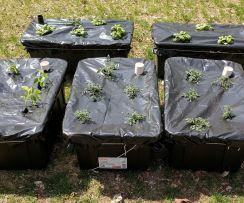 DIY Cold Frame Garden Box 3