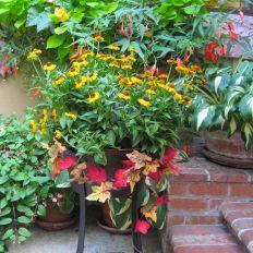 Fall Container Garden Ideas Plants