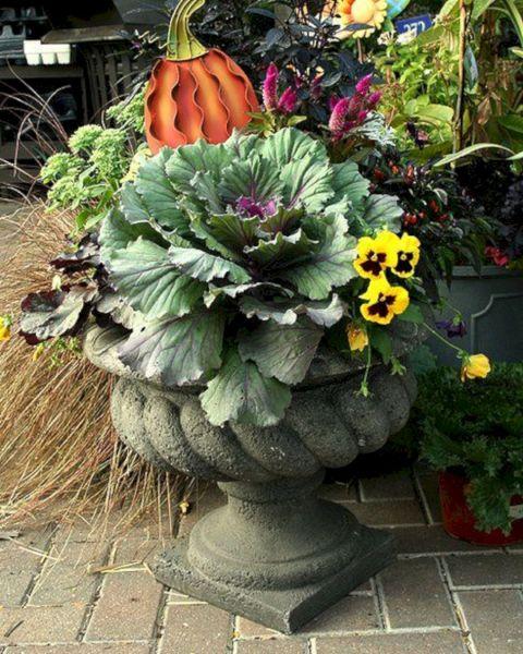 Fall Container Garden Plant Ideas